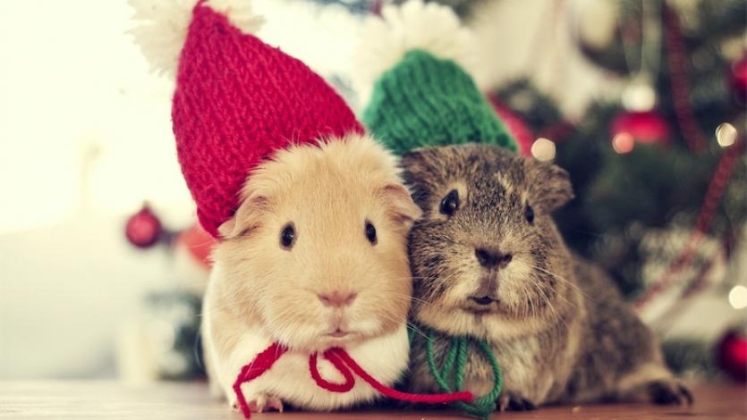 Πώς ο Ρίκι και ο Πίκι, τα δύο ποντικάκια θερμαίνονται τις κρύες ημέρες του χειμώνα! Κουκλοθέατρο