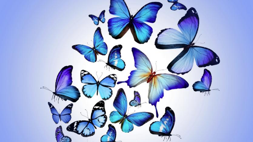 Επιτραπέζιο παιχνίδι: Υπέροχες ιπτάμενες πεταλούδες