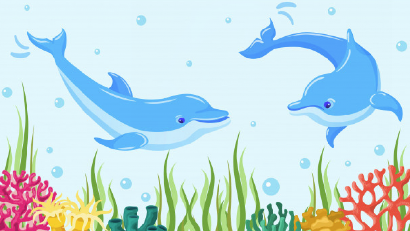Ένα δελφίνι μας χαιρετά